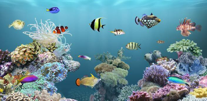 Live Wallpaper Fish