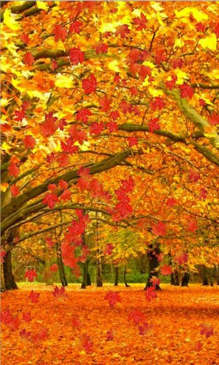 Live Wallpapers Fall