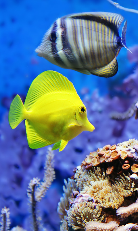 Download Live Wallpapers Fish Gallery