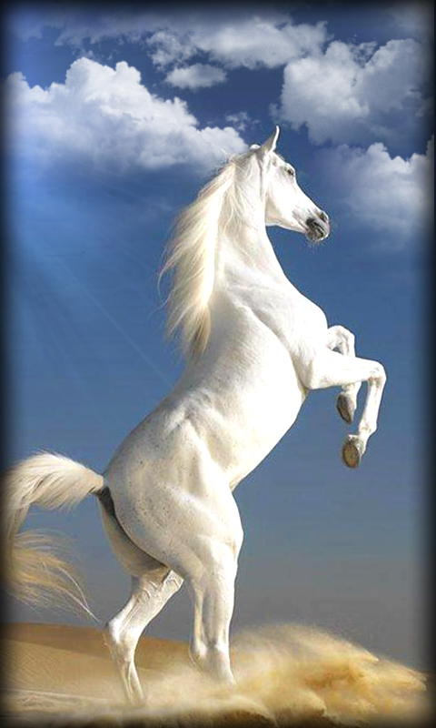 Live Wallpapers Horses