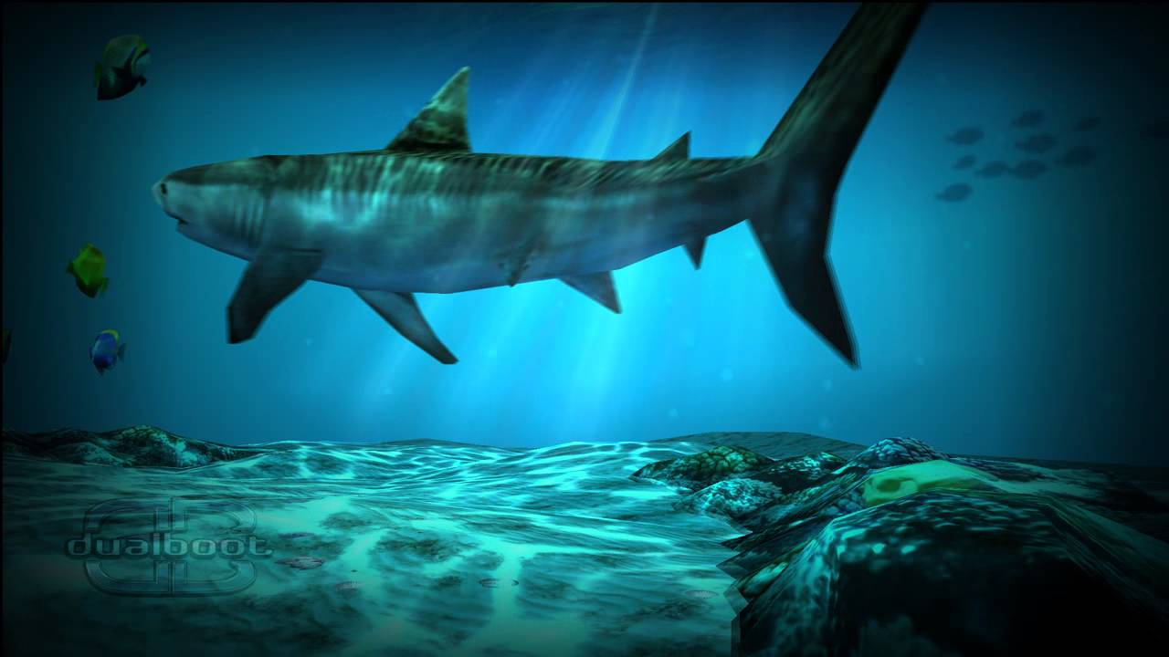 Live Wallpapers Shark