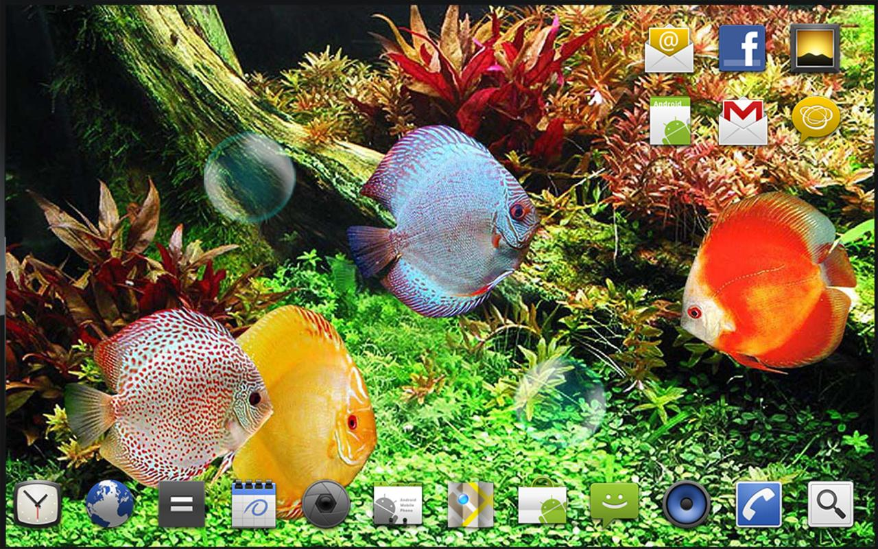 Live Water Fish Wallpaper Free Download
