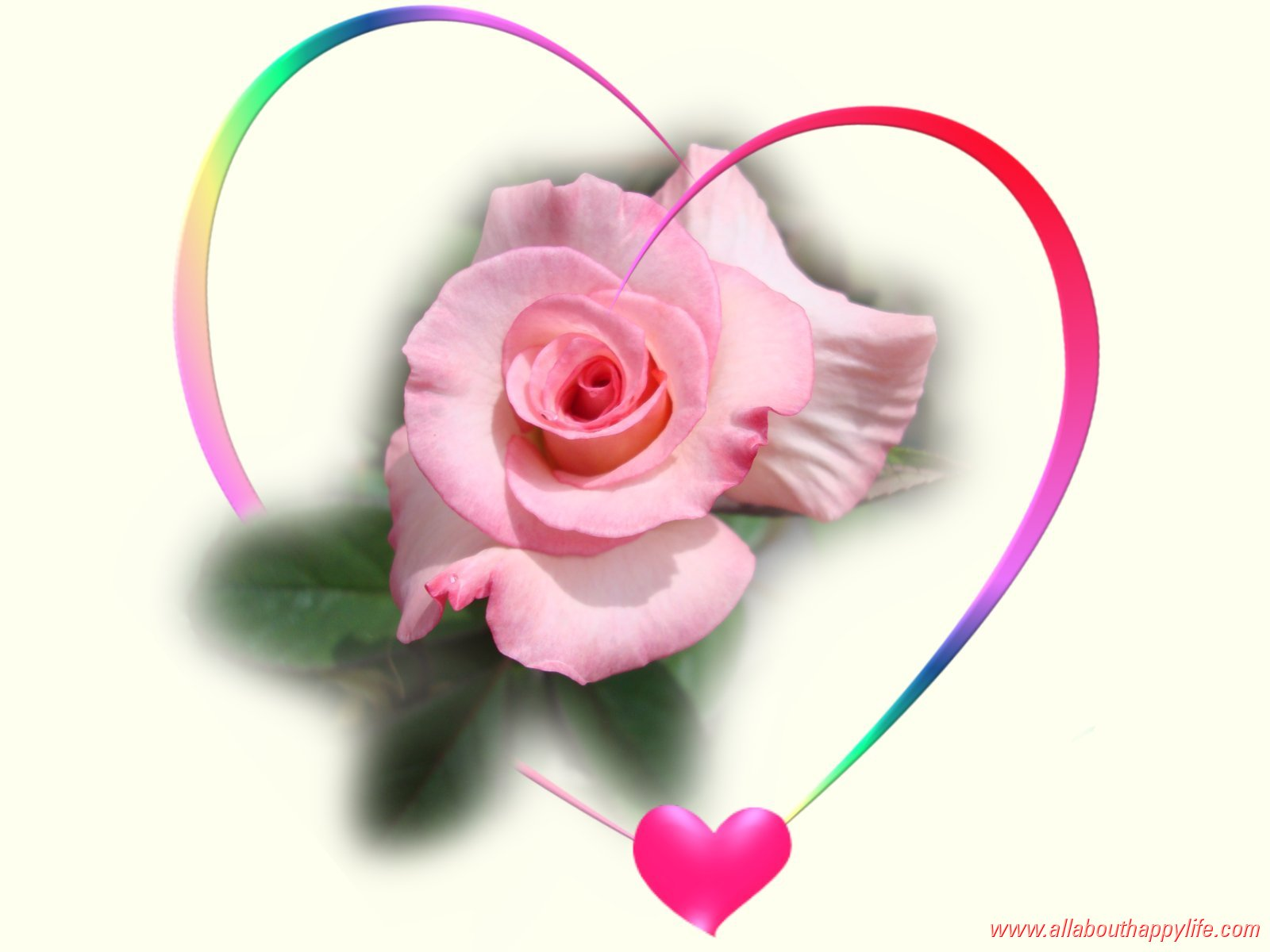 Love Rose Wallpaper Pictures