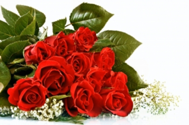 Lovely Red Roses Wallpapers