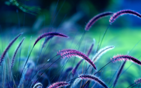 Macro Nature Wallpaper