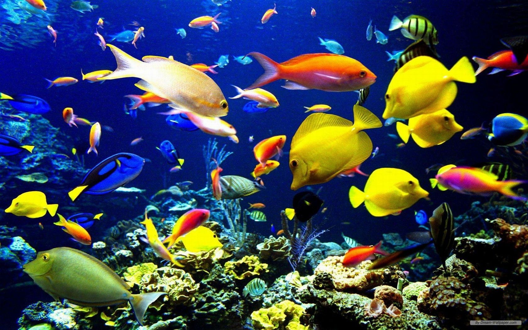 Marine Life Wallpaper
