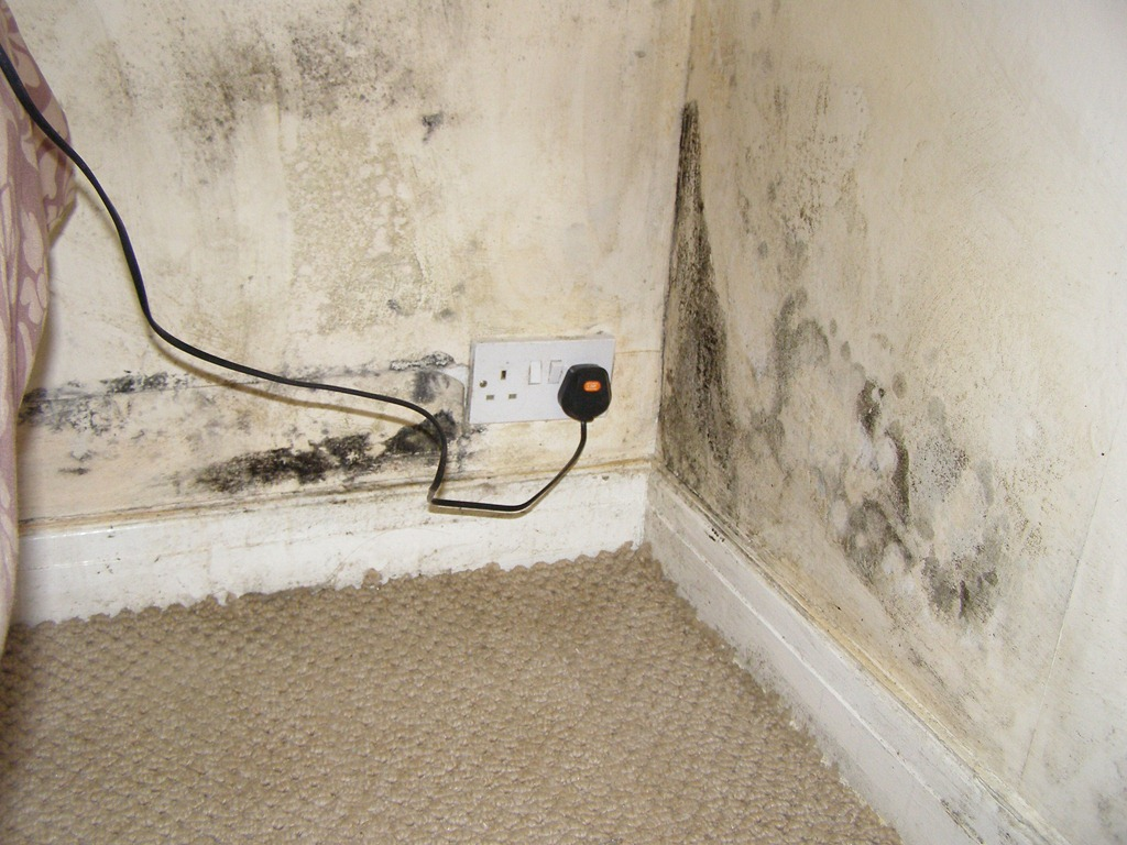 Mould On Wallpaper But Not On Wall