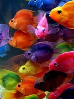 Moving Fish Wallpaper For Phones