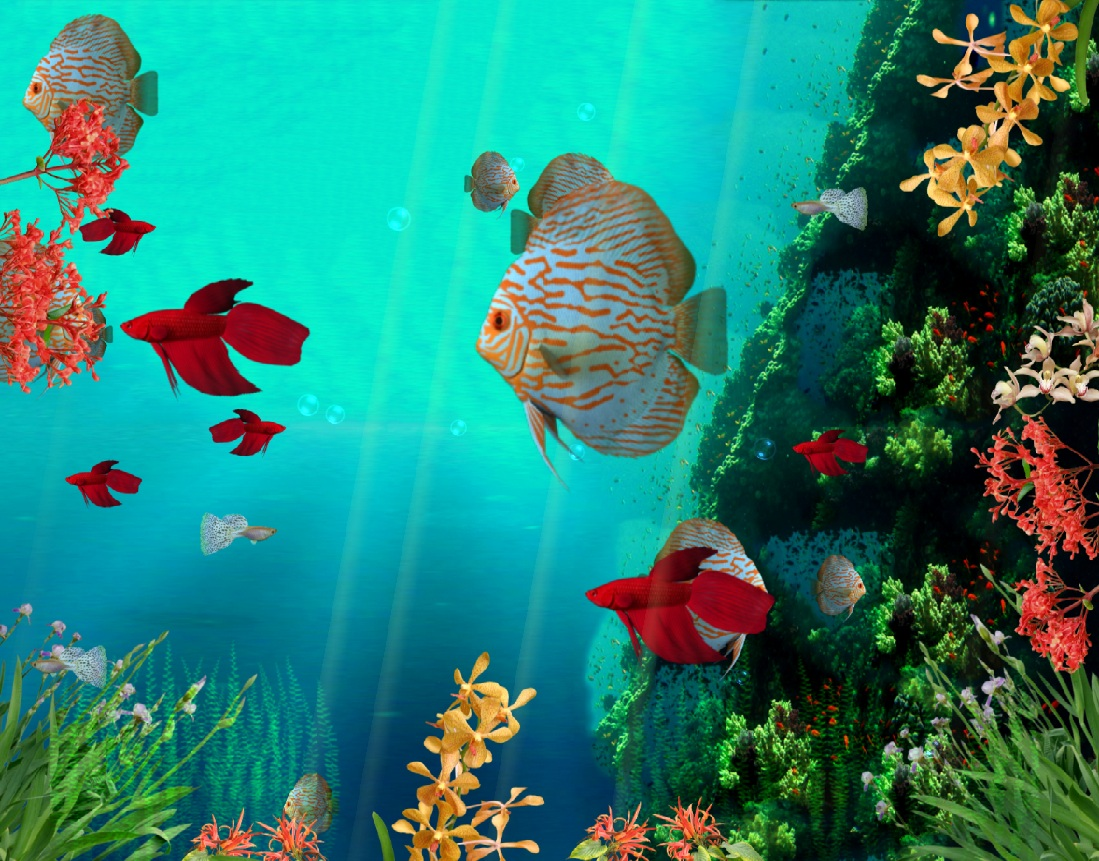 Moving Fish Wallpapers