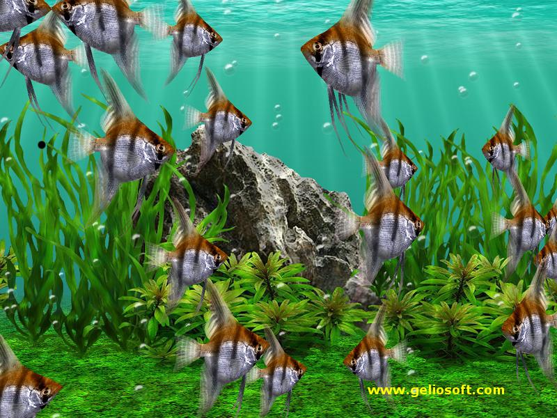 Moving Fishes Wallpaper