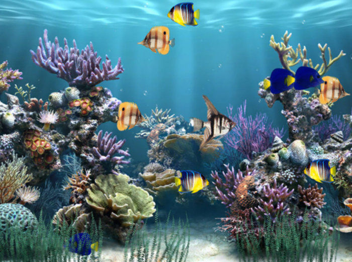 Moving Wallpapers Fish