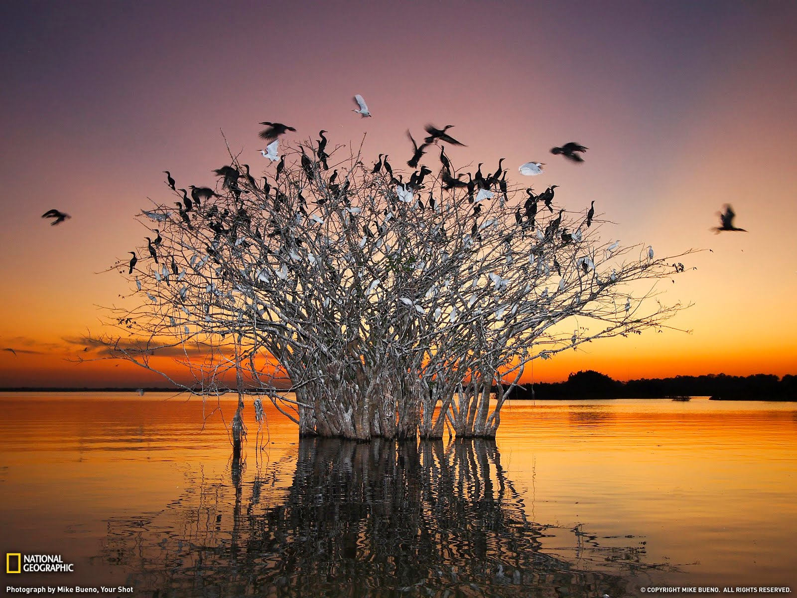 National Geographic Wallpaper Of The Day