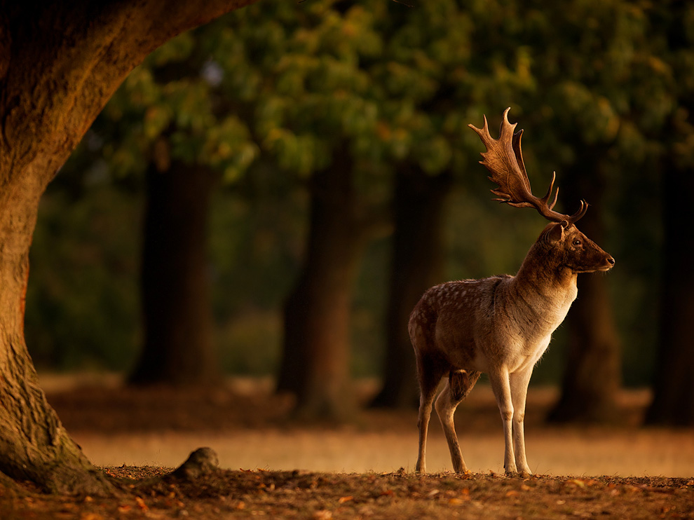 Download national geographic wallpaper of the day gallery - National geographic wild wallpapers ...