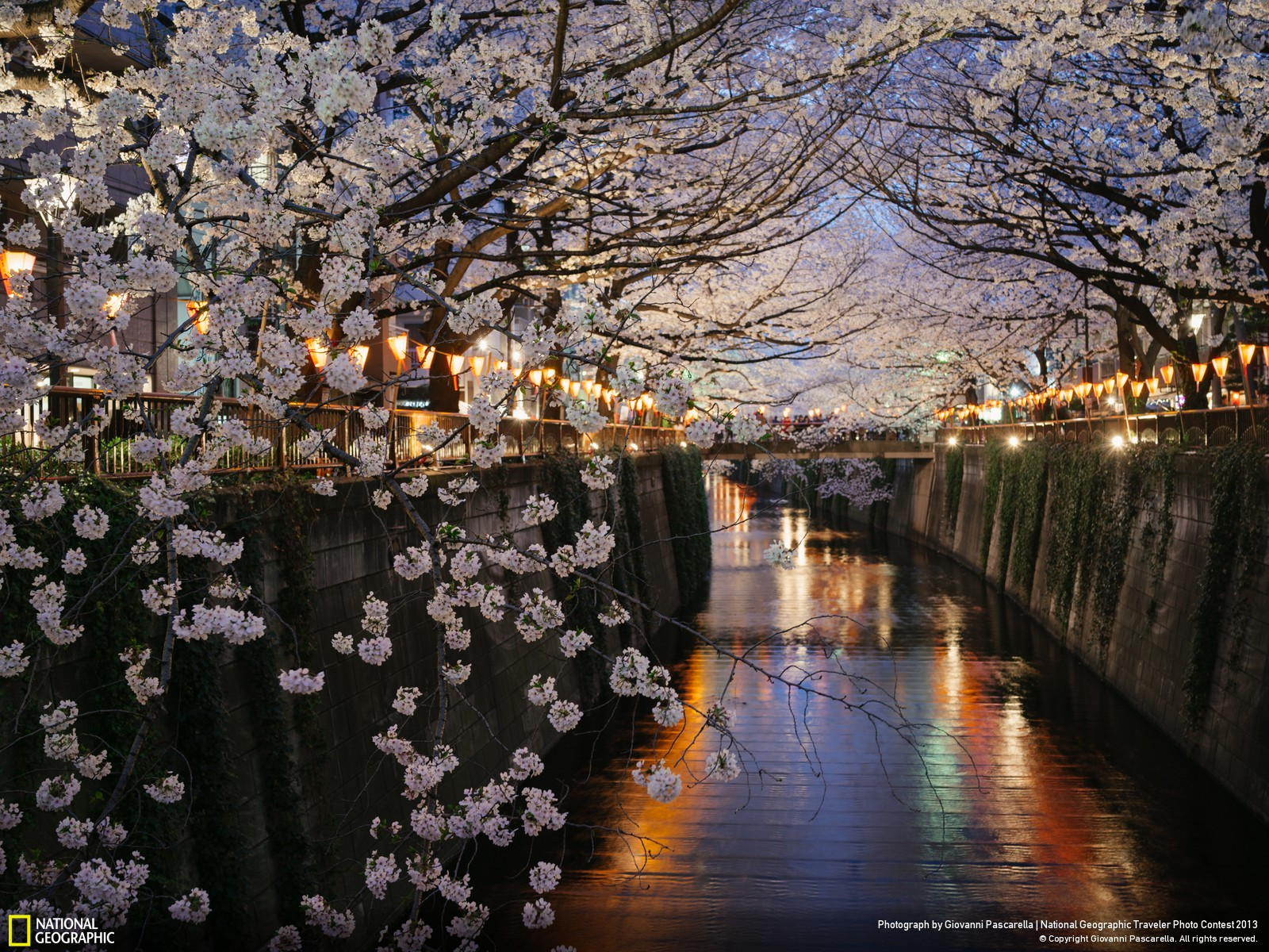 download national geographic wallpaper spring gallery
