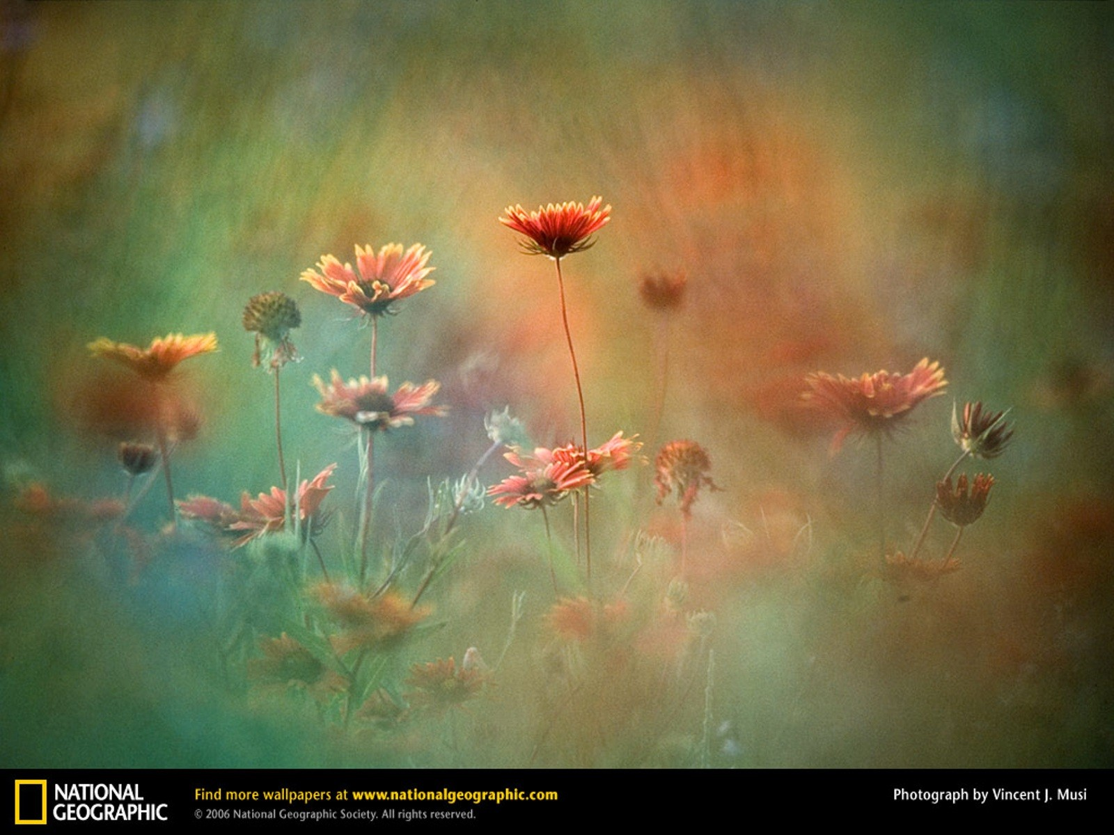 Wallpaper Gallery: Download National Geographic Wallpaper Spring Gallery