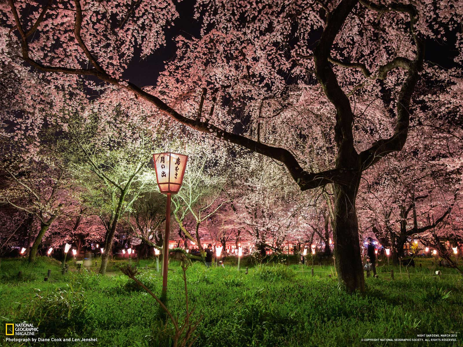 National Geographic Wallpaper Spring