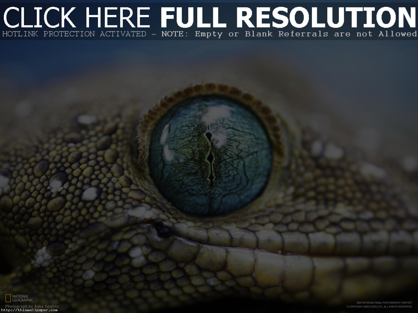 National Geographic Wallpapers Full HD