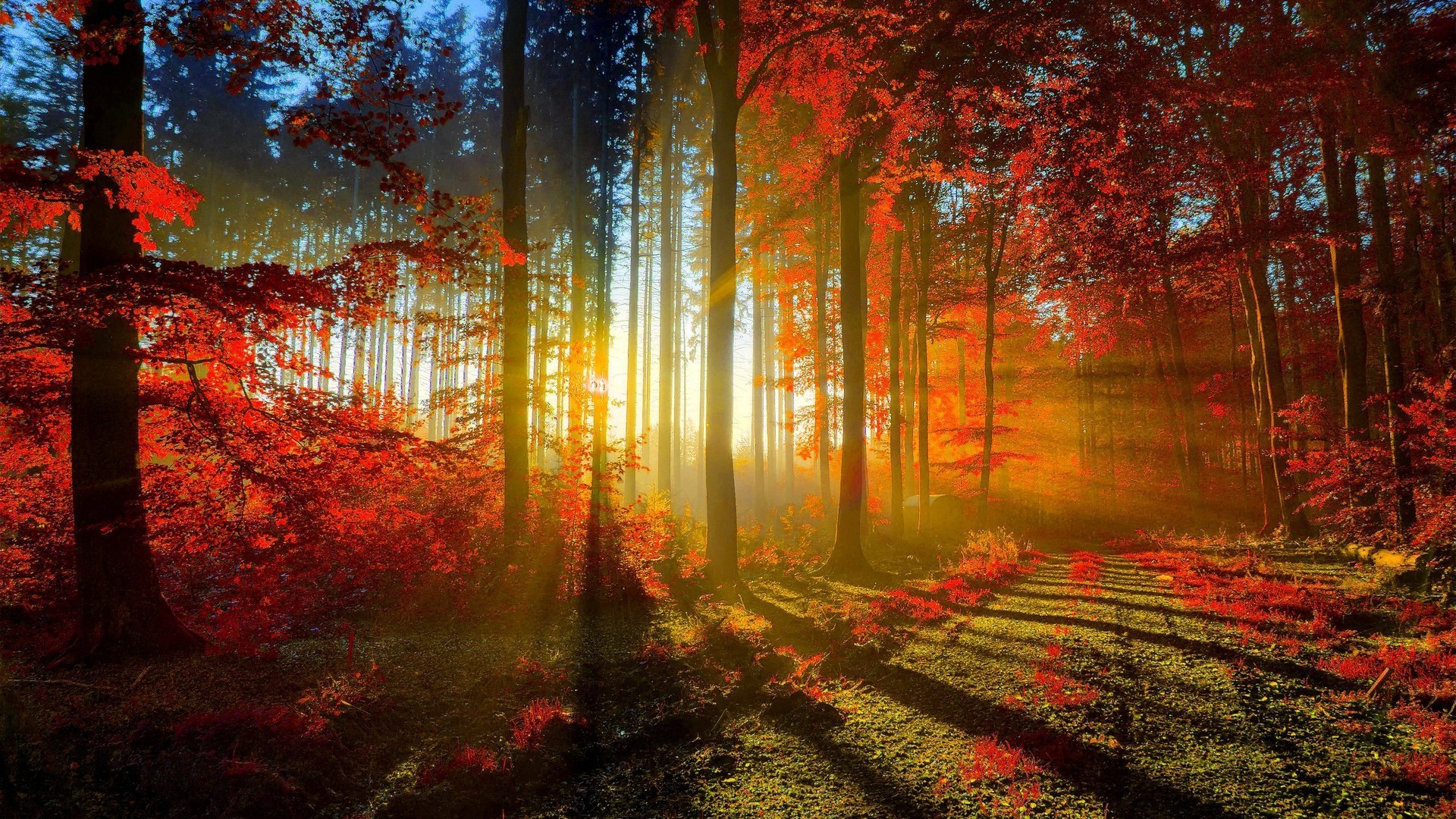 Natural Images Wallpapers Free Download
