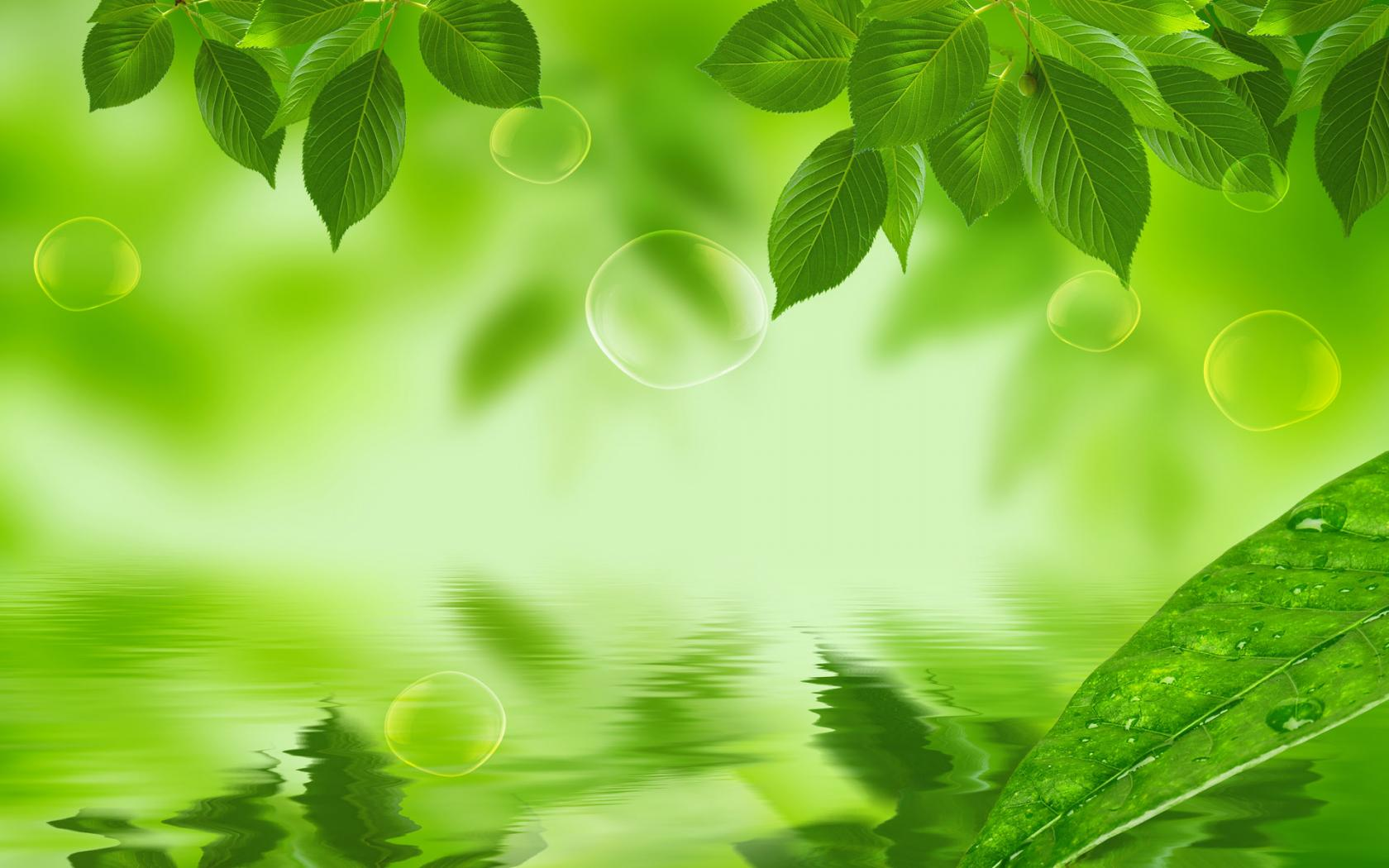 Natural Leaf Wallpaper
