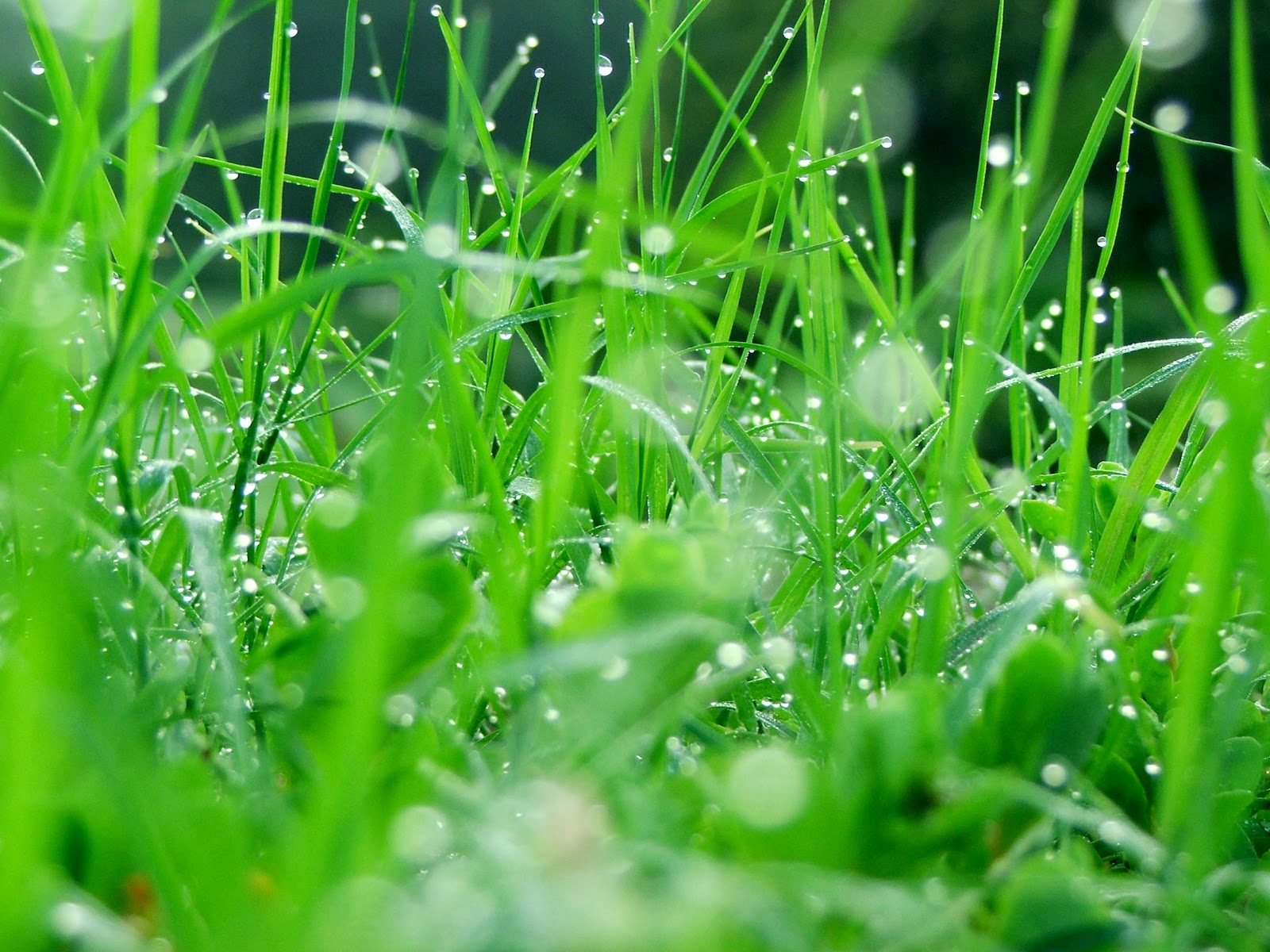 Natural Rain Wallpaper