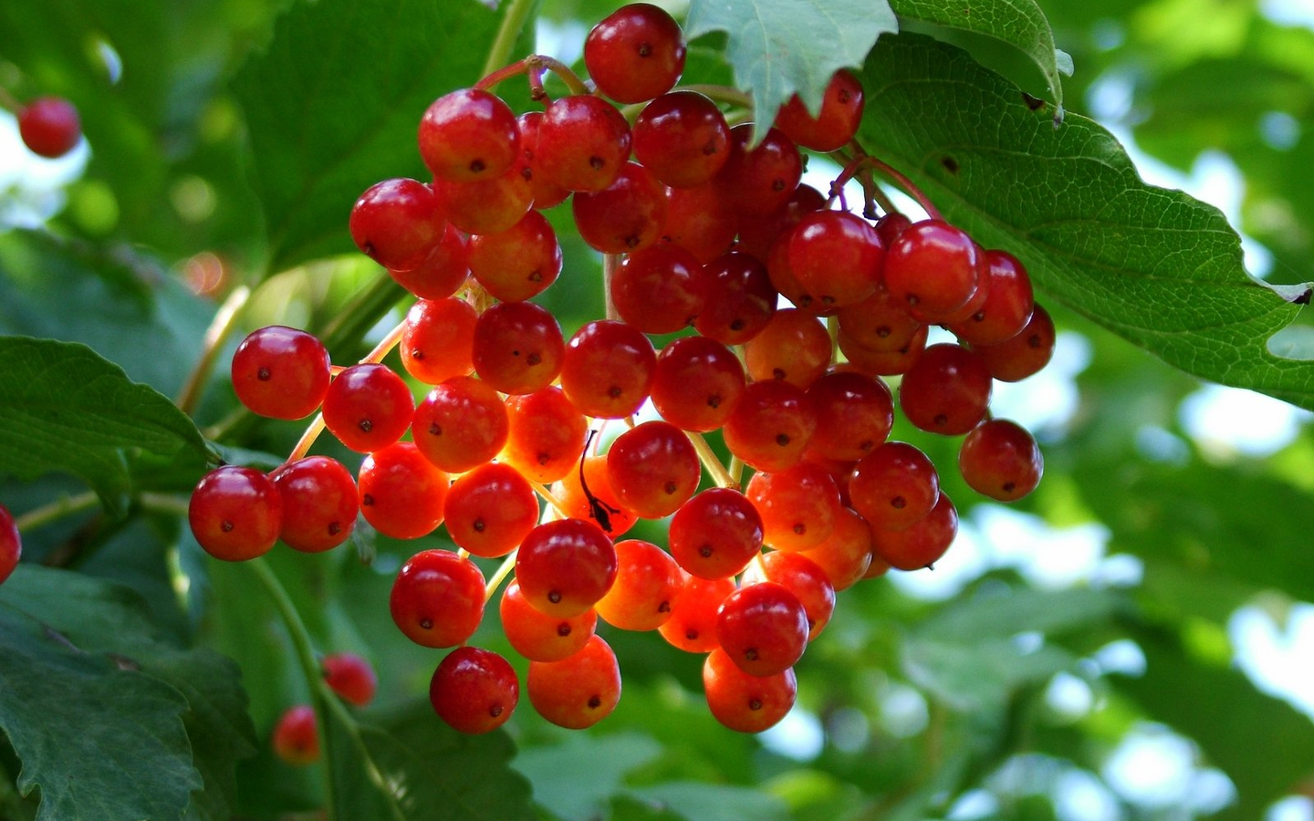 Nature Fruits Wallpapers
