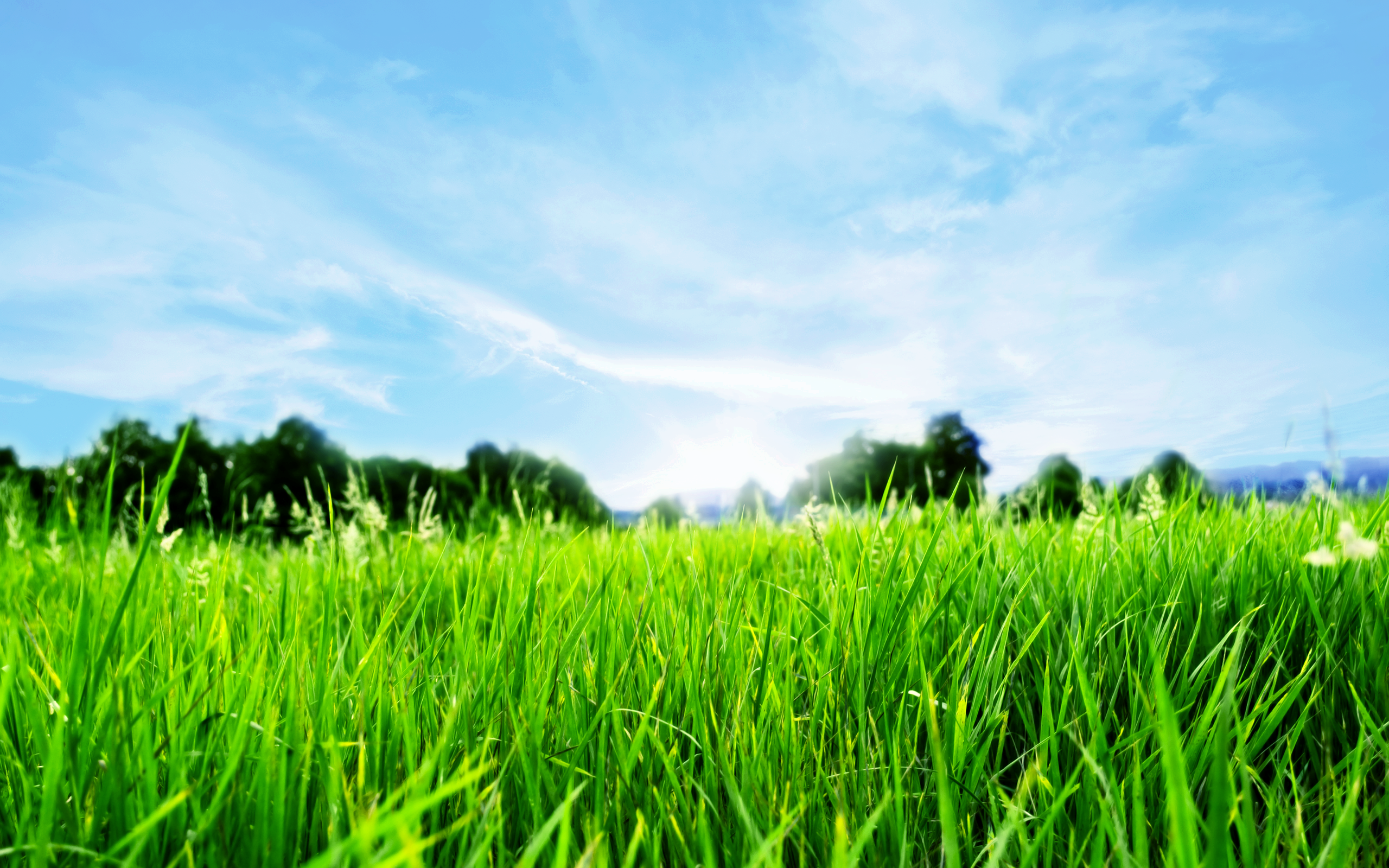 Nature Grass Wallpaper