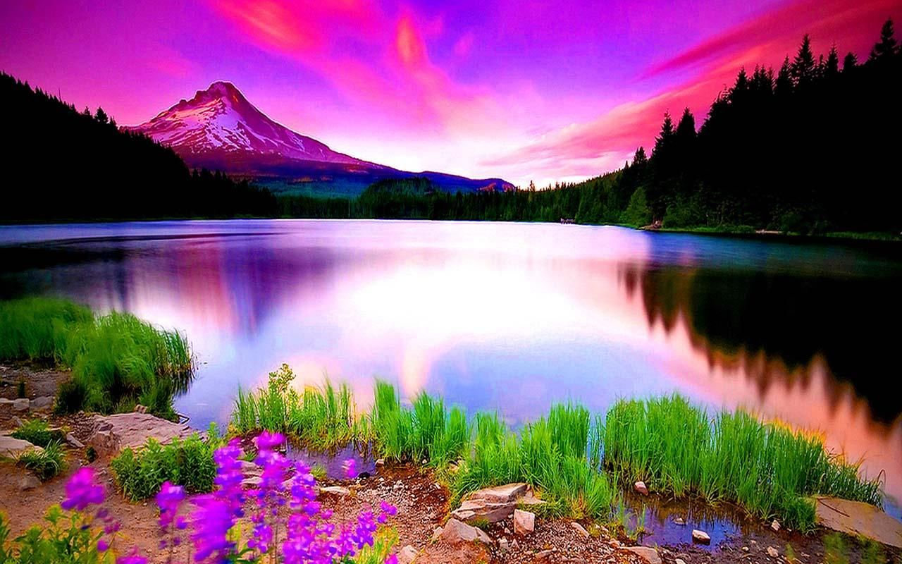 nature wallpapers for android: Download Nature HD Wallpapers For Android Gallery