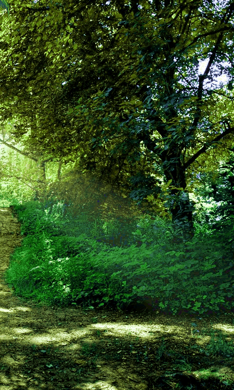 Nature Phone Wallpapers