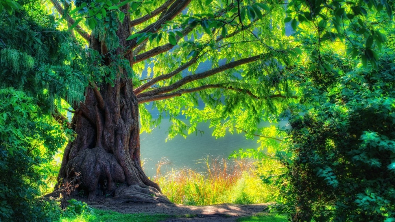 Nature Tree HD Wallpapers