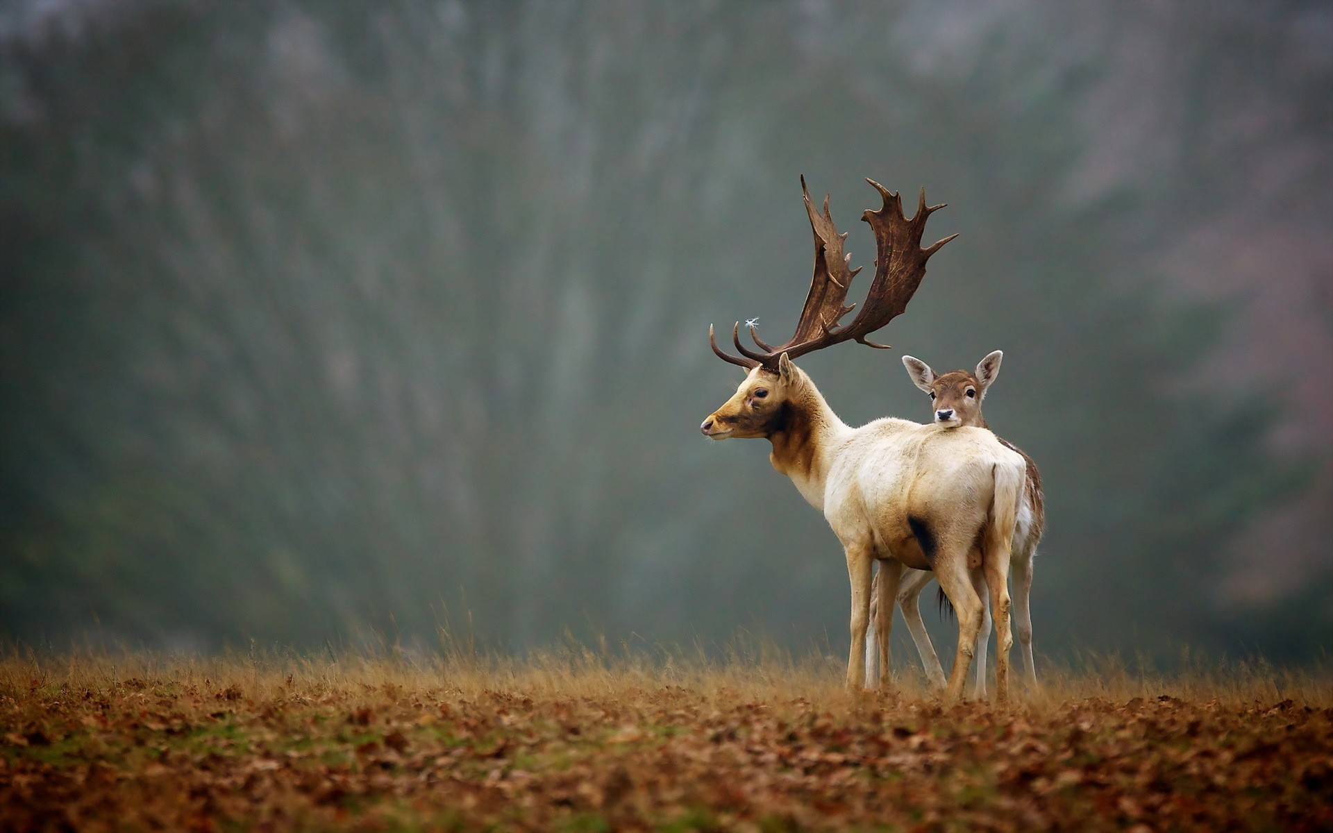 Nature Wallpaper With Animals