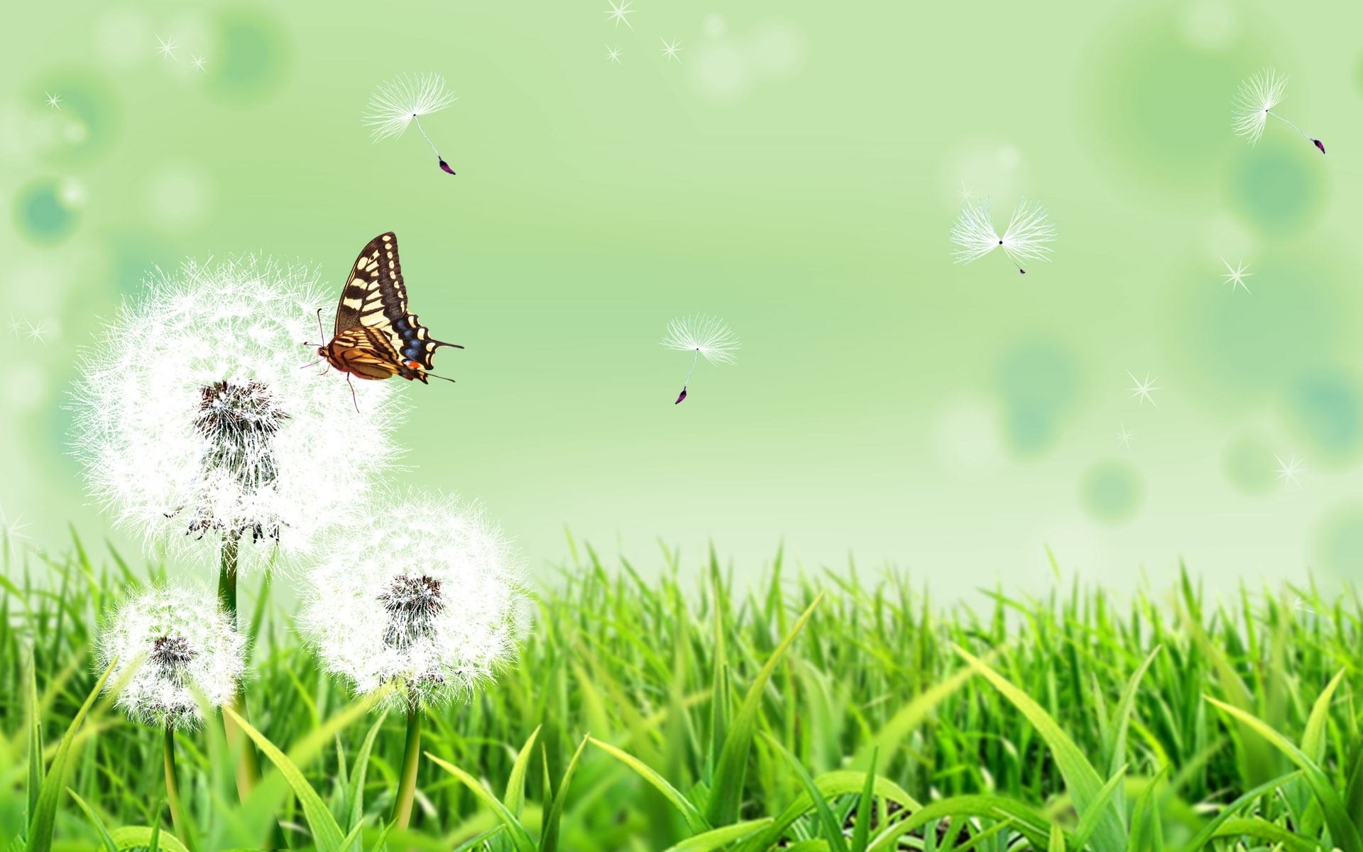 Nature Wallpapers Download