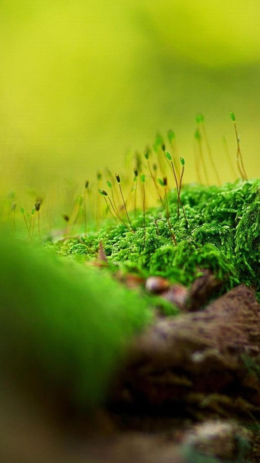 Nature Wallpapers For Android