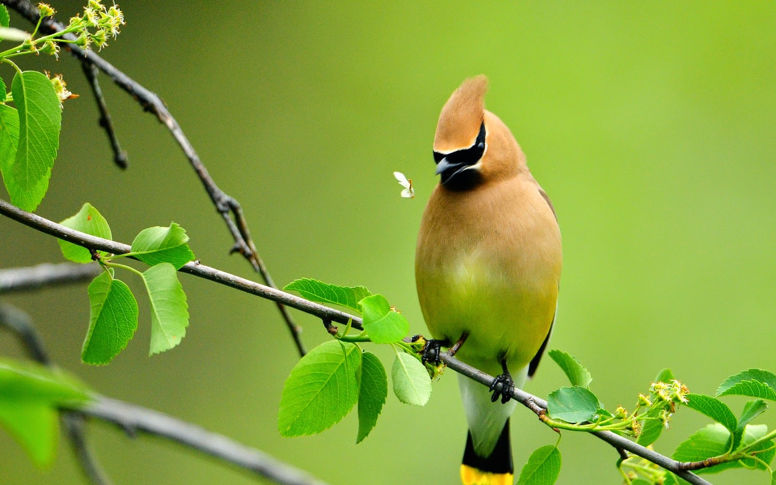 Nature With Birds Wallpaper