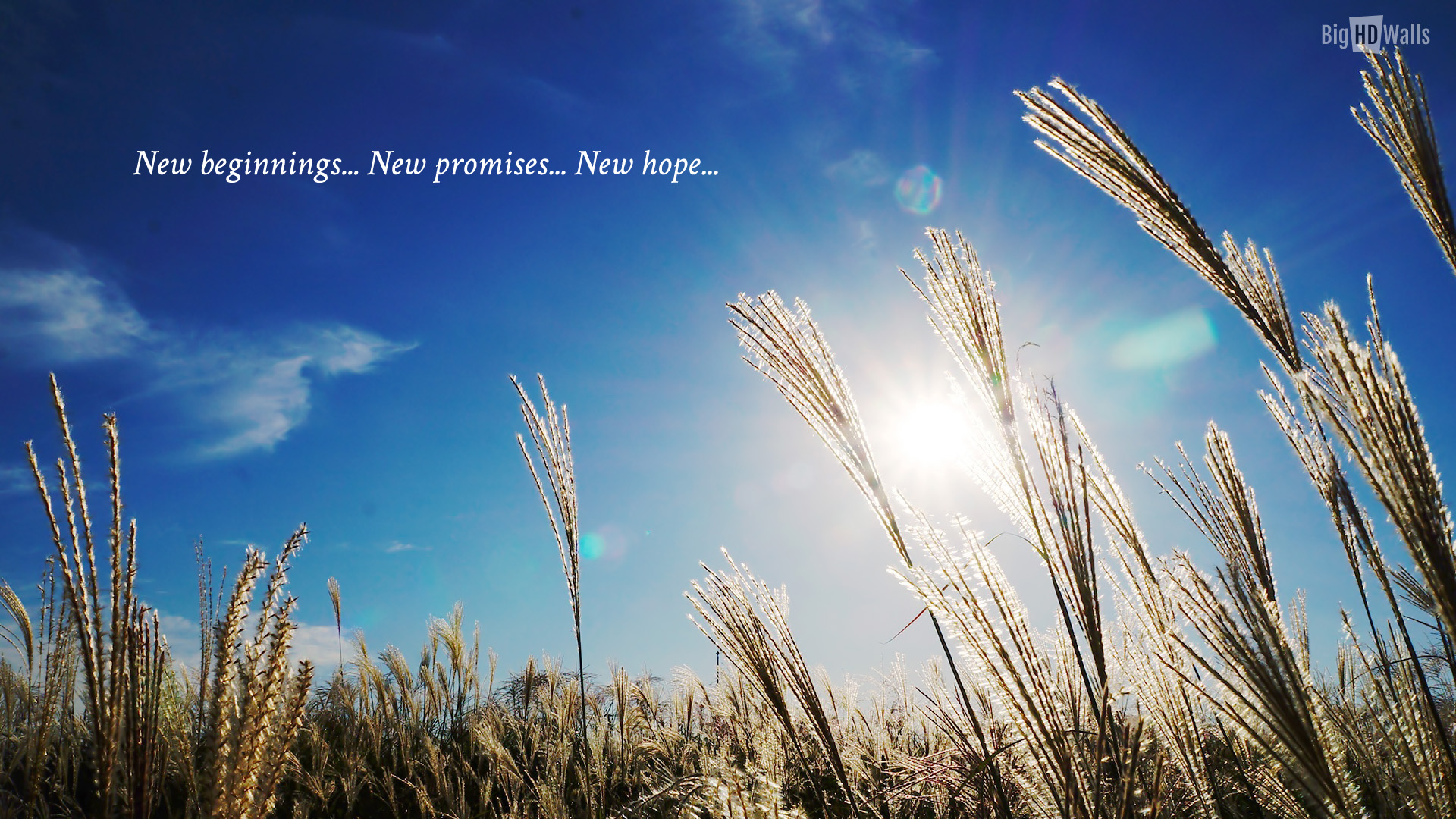 New Beginnings Wallpaper