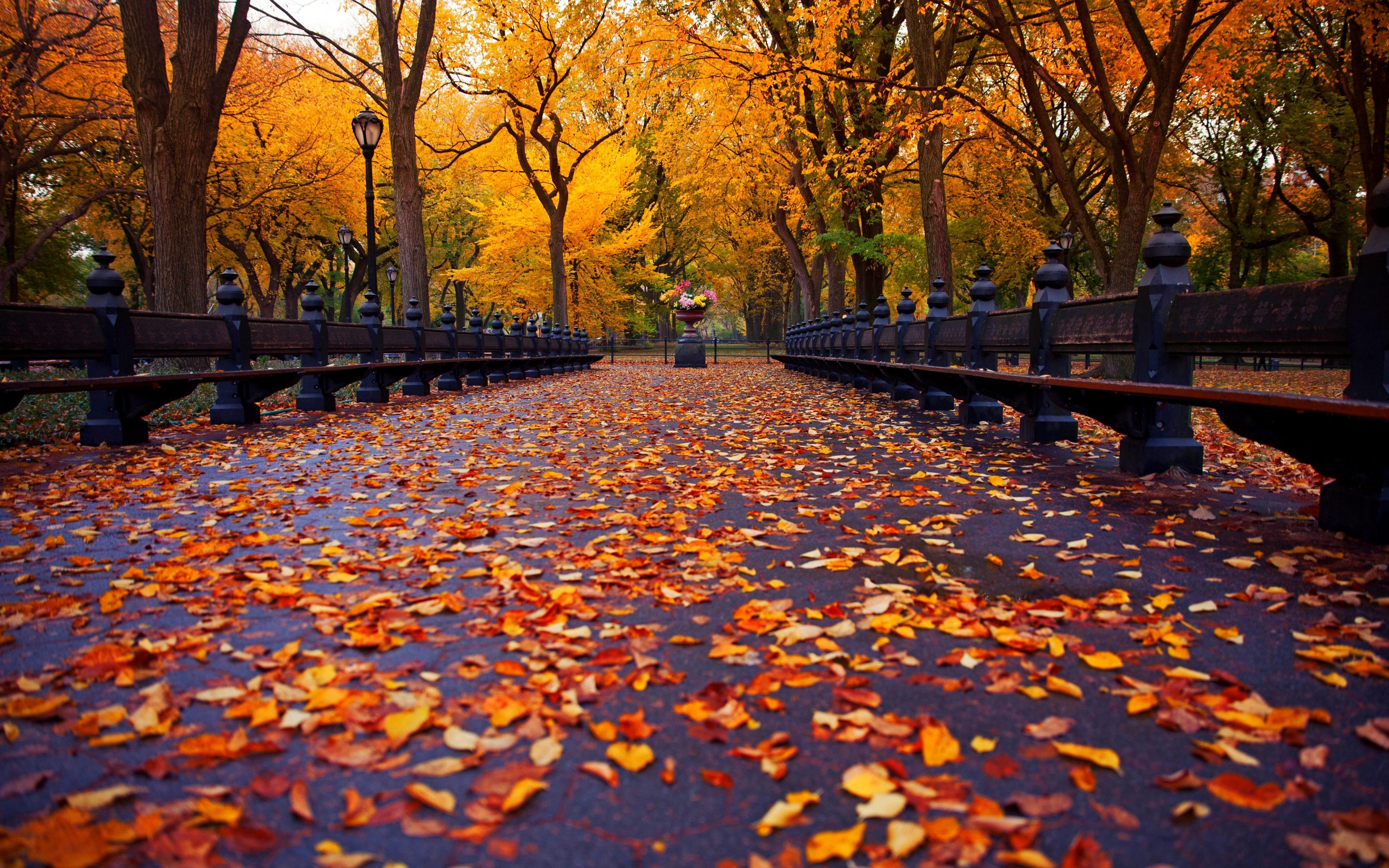 New York Fall Wallpaper