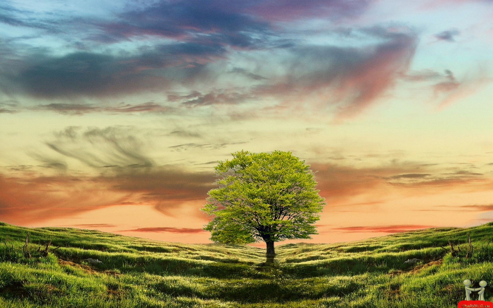 Next Natural Trees Wallpaper
