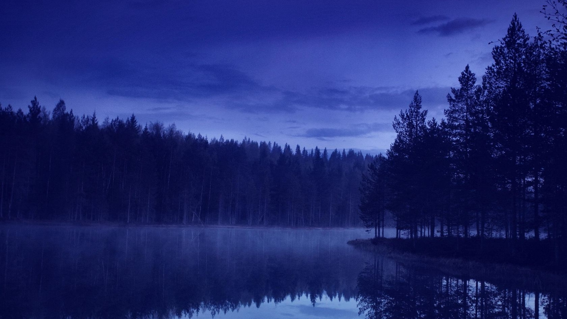 Night Forest Wallpaper