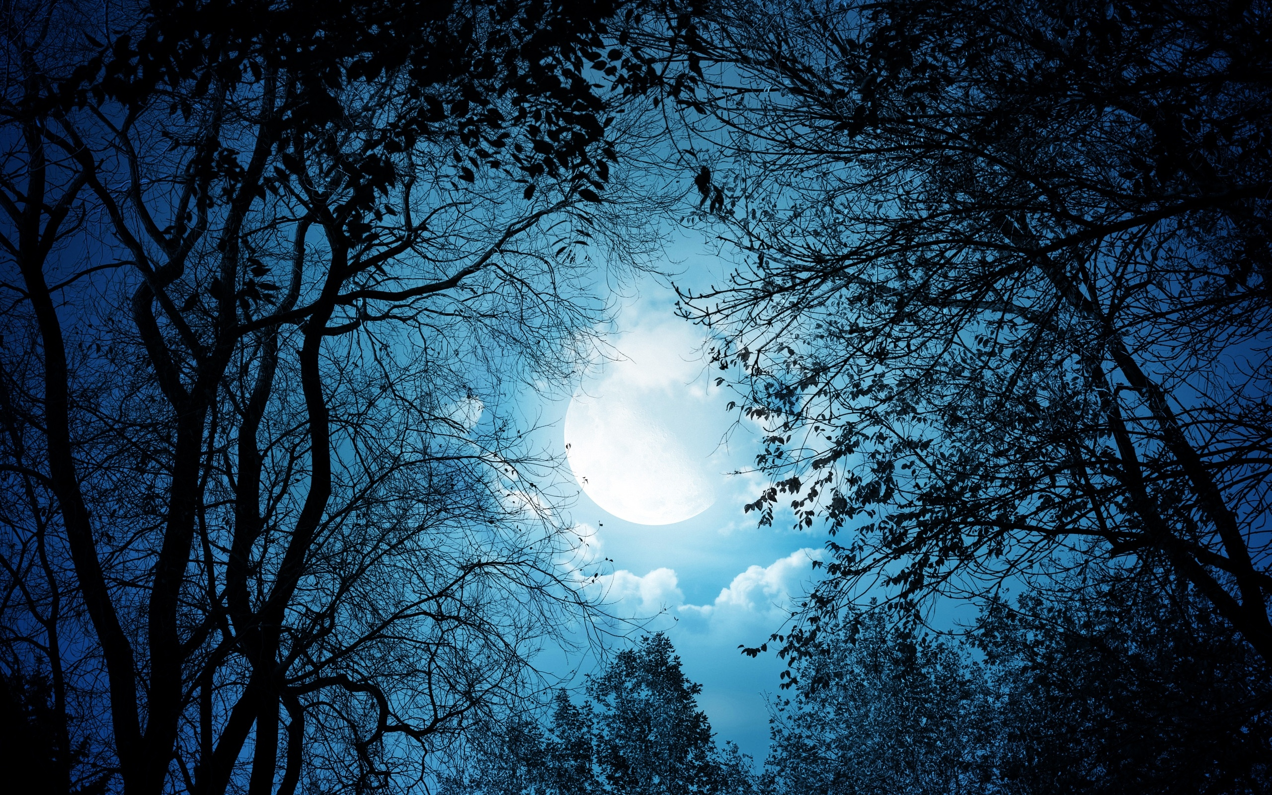 Night Tree Wallpaper