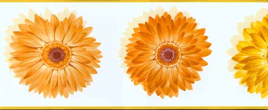 Orange Wallpaper Border