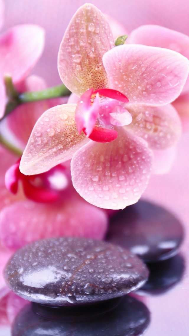 Orchid Iphone Wallpaper
