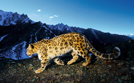 Os X Leopard Wallpapers