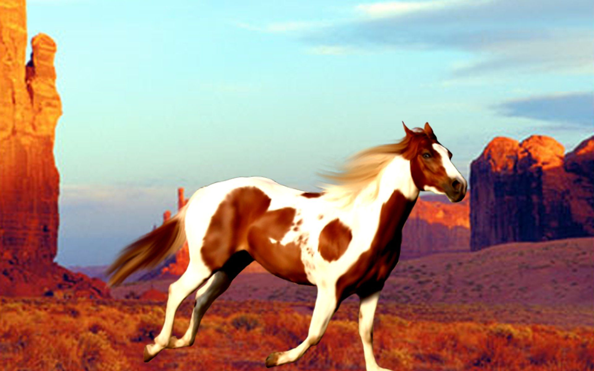 Paint Horse Wallpaper