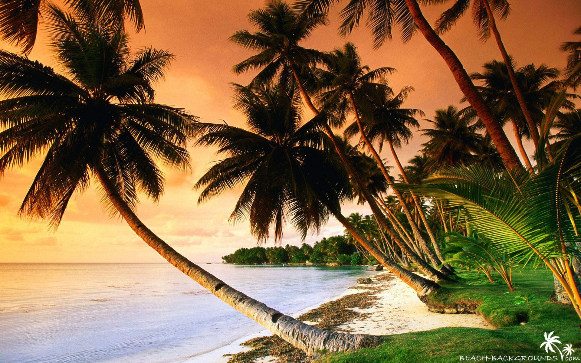 Palm Tree Beach Wallpaper