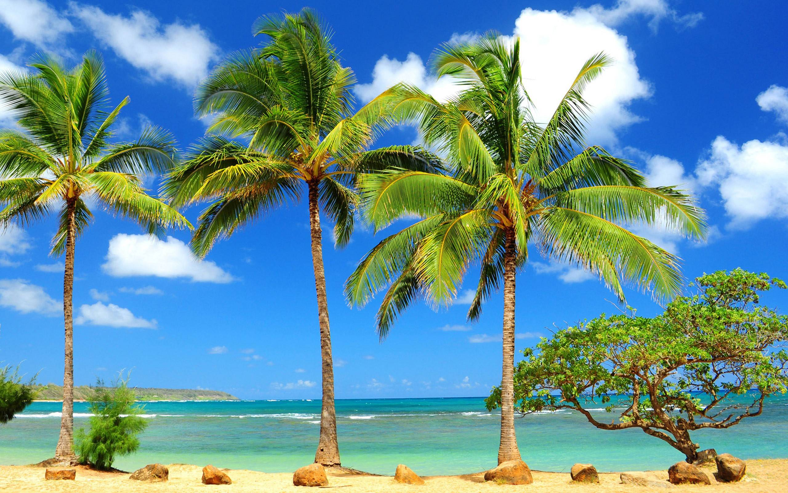 Palm Tree HD Wallpaper