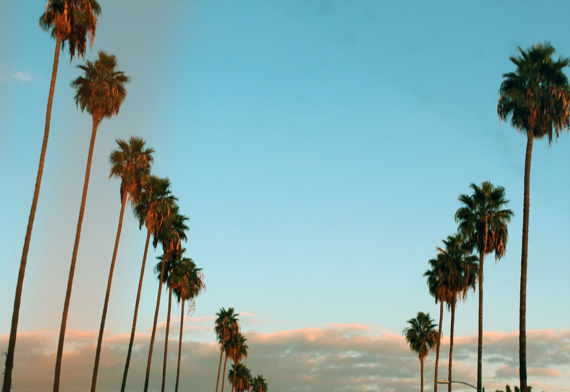 download palm tree wallpaper tumblr gallery