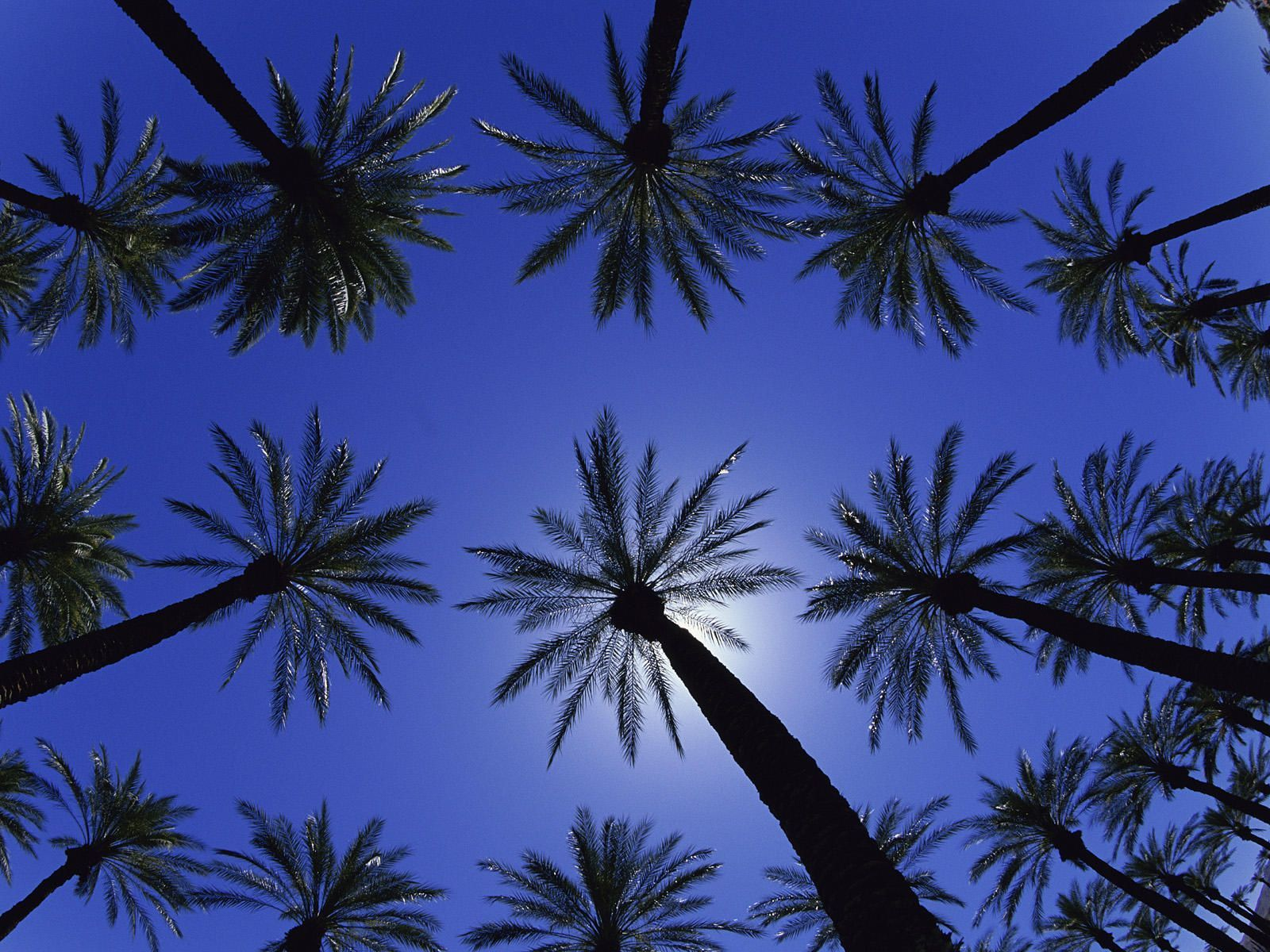 Palm Trees Desktop Wallpaper