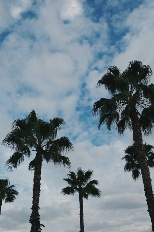 Palm Trees Wallpaper Tumblr
