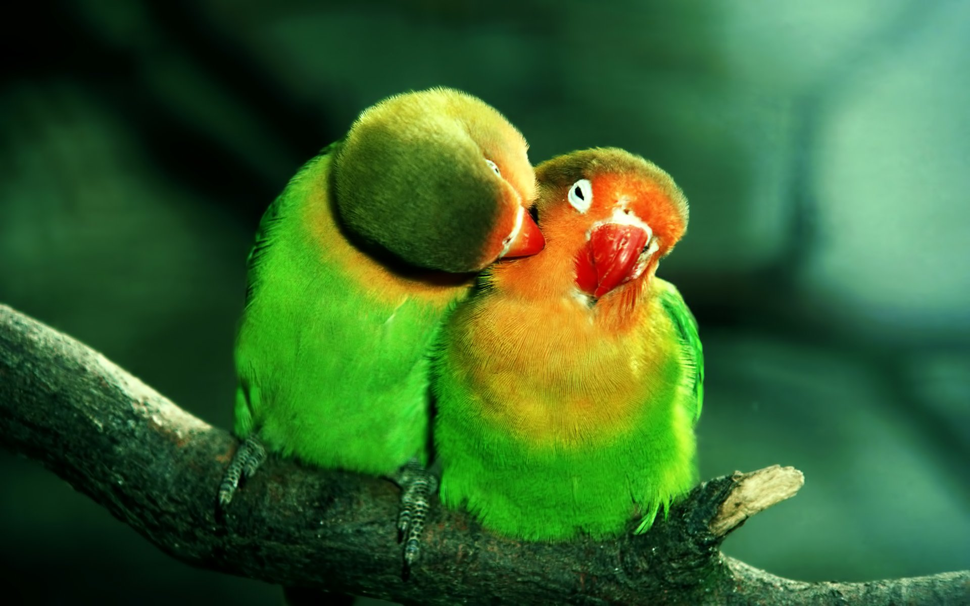 Parrot Pictures Wallpapers