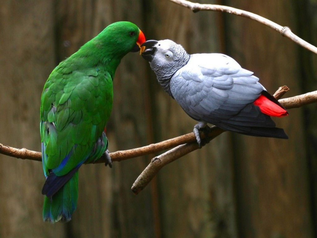 Parrot Wallpaper Free Download