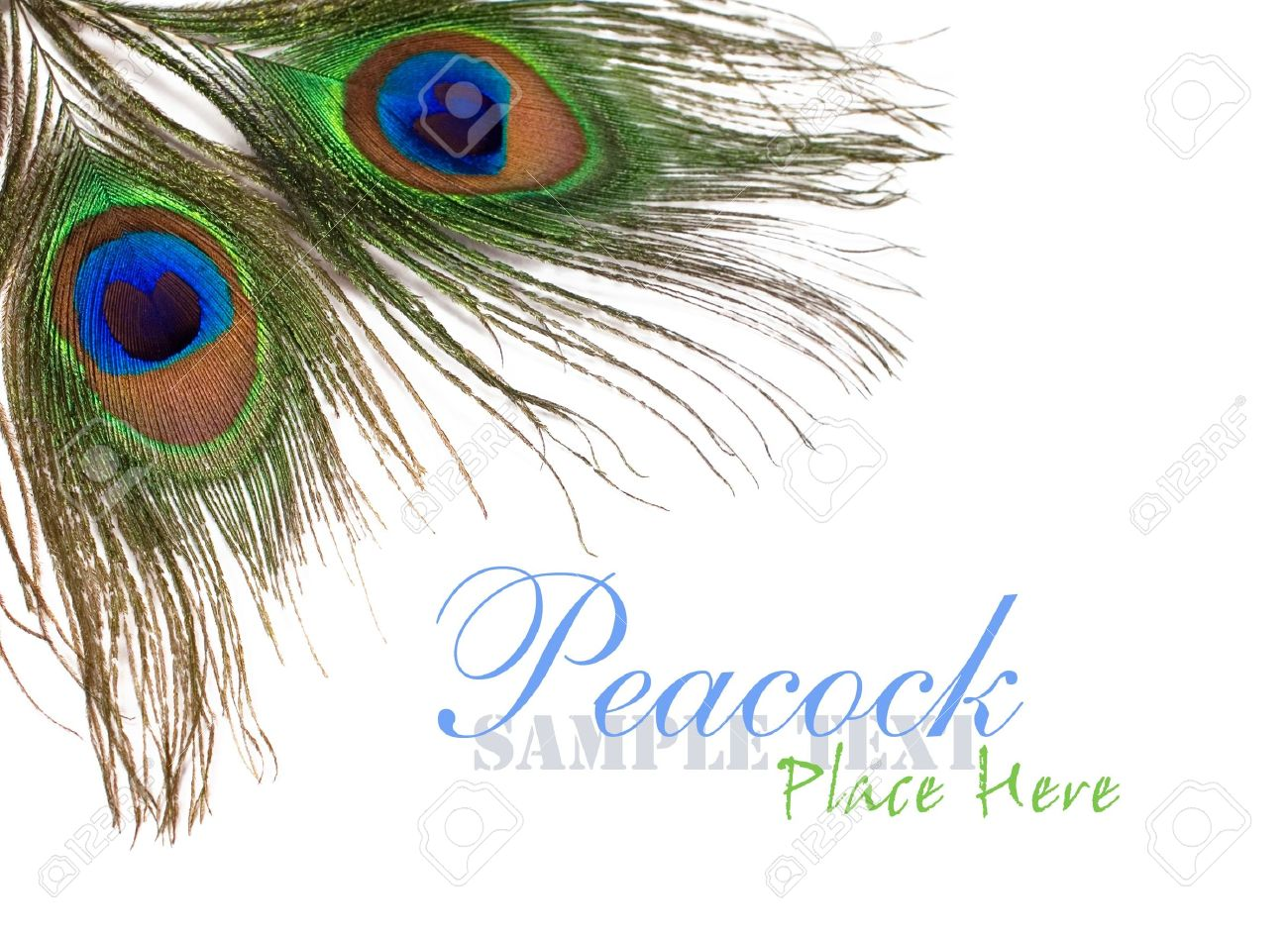 download peacock feather design wallpaper gallery
